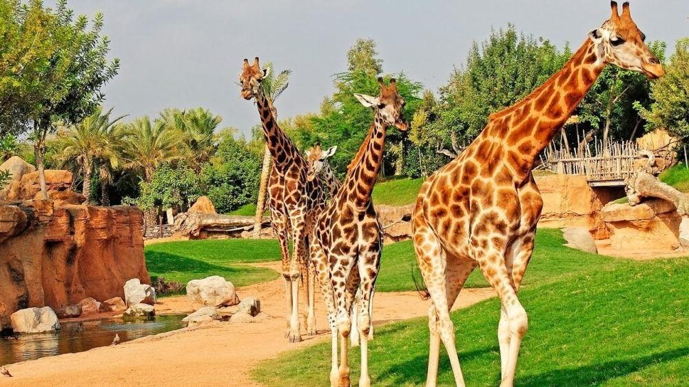 Bioparc Zoo