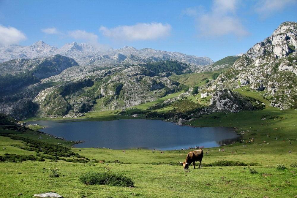 Destinació Parc Nacional d' pics d'Europa Espanya