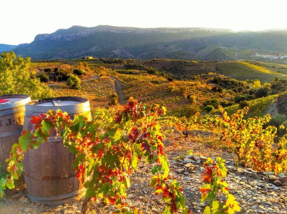 Destinació Rioja Wine Region Espanya