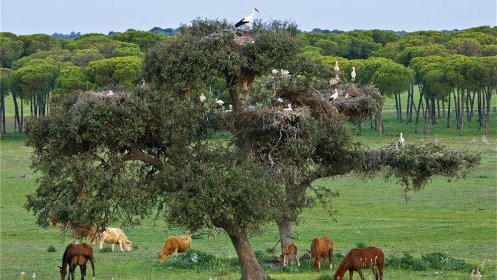 Parc Nacional de Doñana
